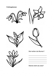 Wortfindung: Frühlingsblumen